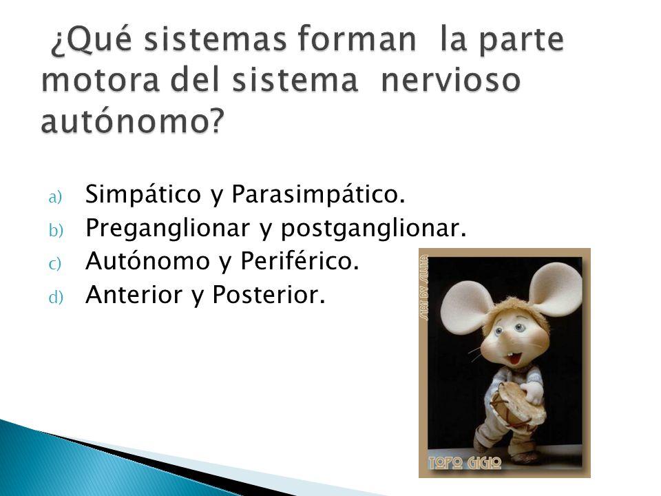 ¿Qué sistemas forman la parte motora del sistema nervioso autónomo