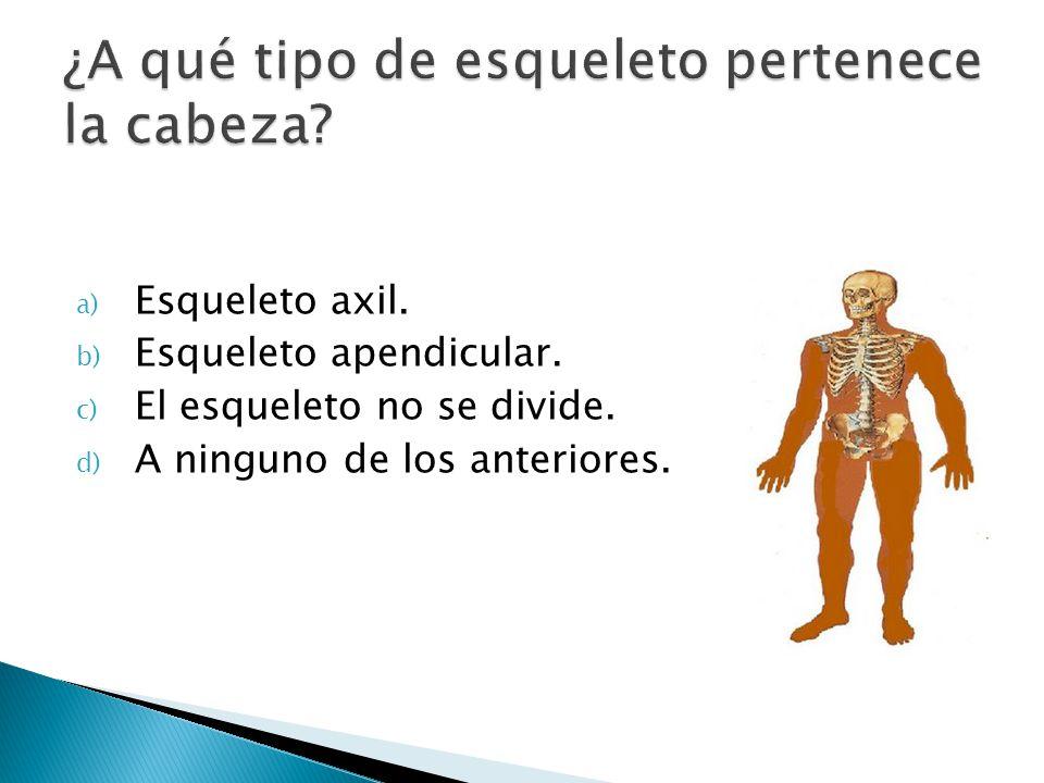 ¿A qué tipo de esqueleto pertenece la cabeza