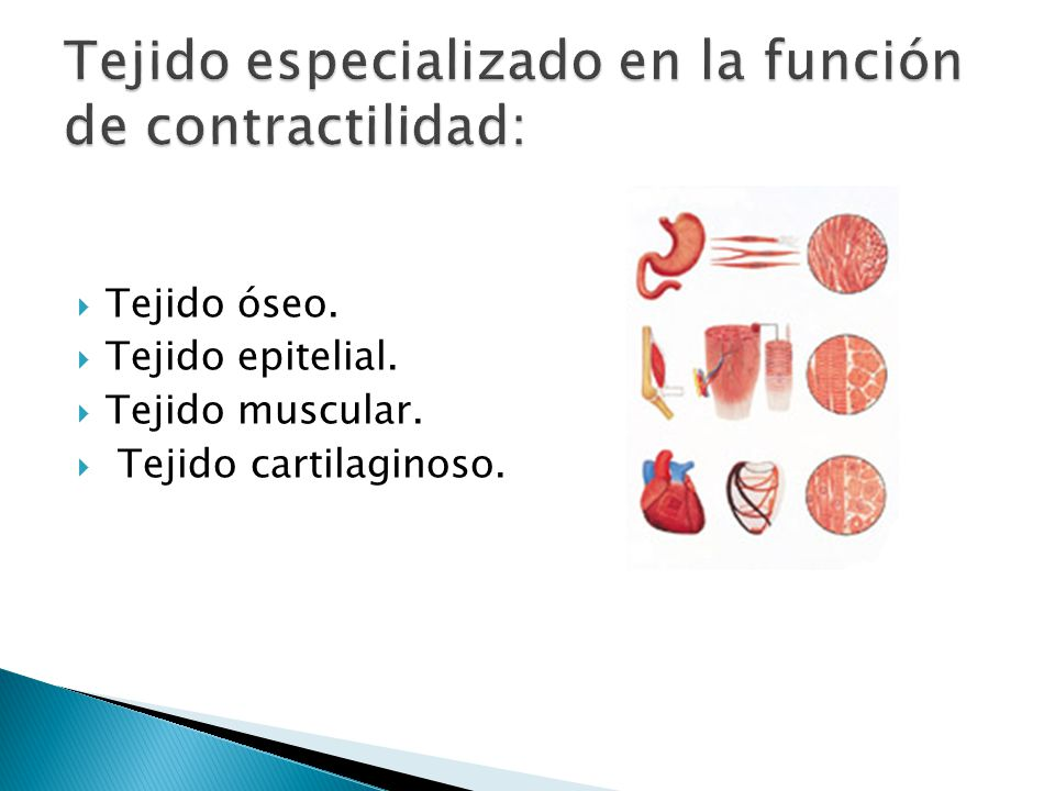 Tejido especializado en la función de contractilidad: