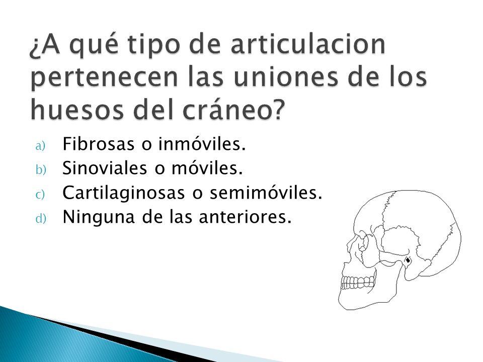 ¿A qué tipo de articulacion pertenecen las uniones de los huesos del cráneo
