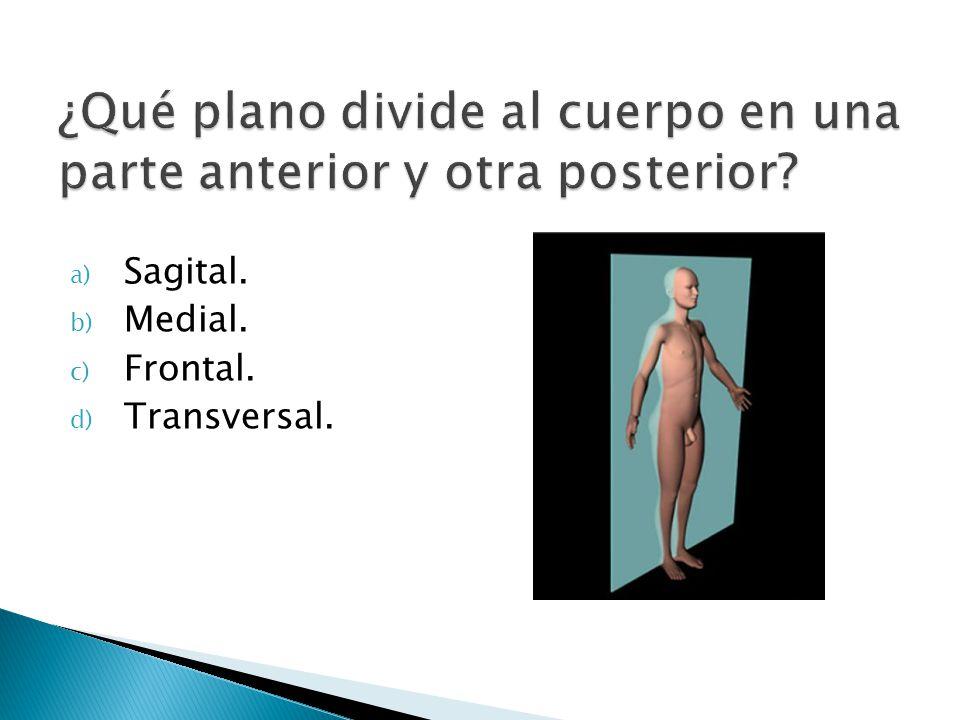 ¿Qué plano divide al cuerpo en una parte anterior y otra posterior