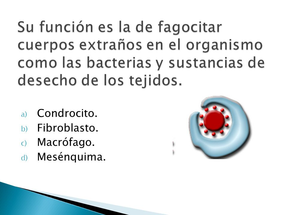 Su función es la de fagocitar cuerpos extraños en el organismo como las bacterias y sustancias de desecho de los tejidos.