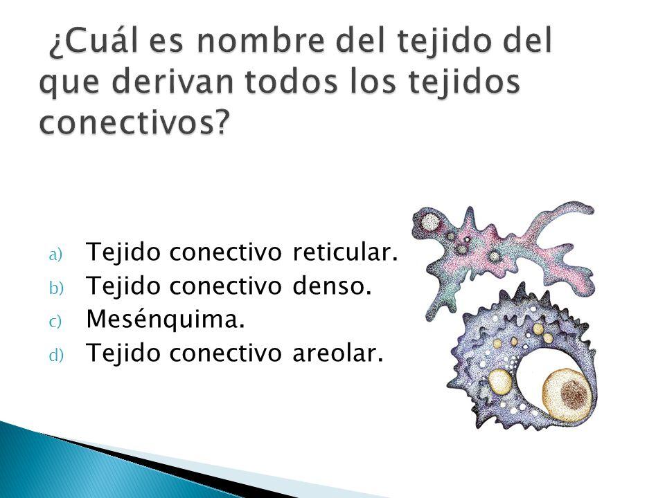 ¿Cuál es nombre del tejido del que derivan todos los tejidos conectivos
