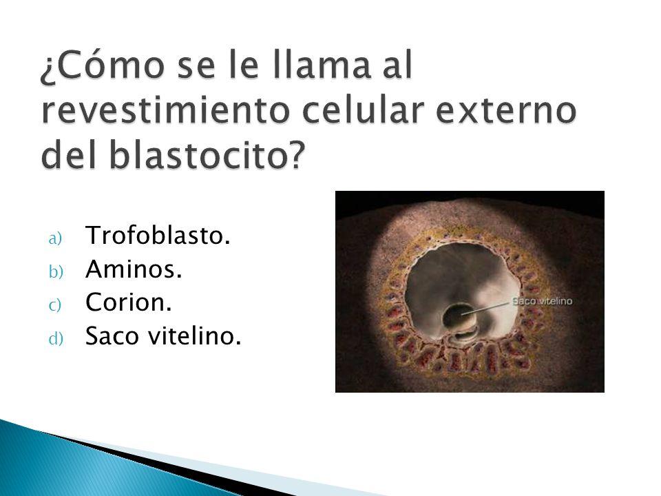¿Cómo se le llama al revestimiento celular externo del blastocito