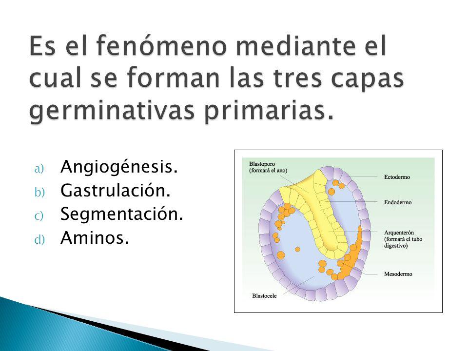 Es el fenómeno mediante el cual se forman las tres capas germinativas primarias.