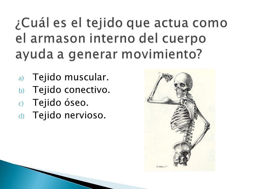 ¿Cuál es el tejido que actua como el armason interno del cuerpo ayuda a generar movimiento