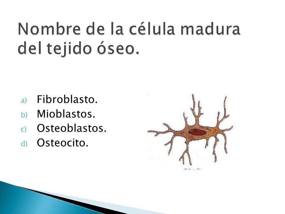 Nombre de la célula madura del tejido óseo.