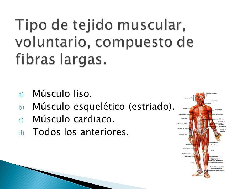 Tipo de tejido muscular, voluntario, compuesto de fibras largas.
