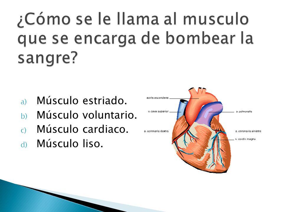 ¿Cómo se le llama al musculo que se encarga de bombear la sangre