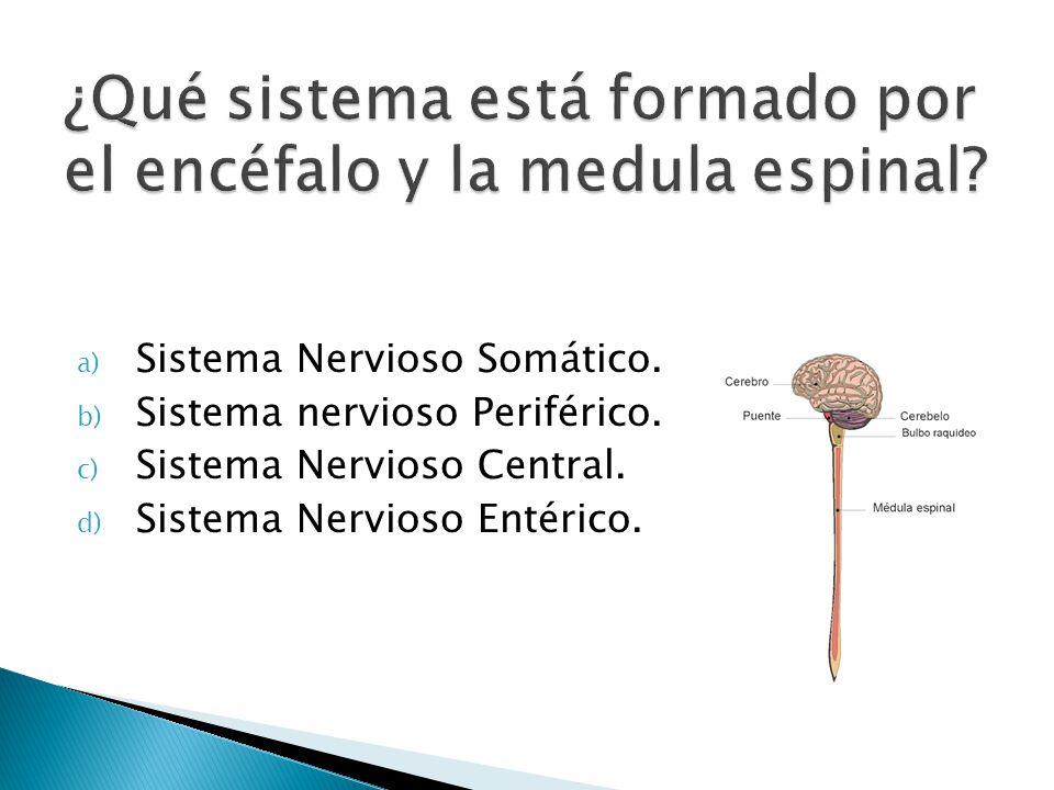 ¿Qué sistema está formado por el encéfalo y la medula espinal