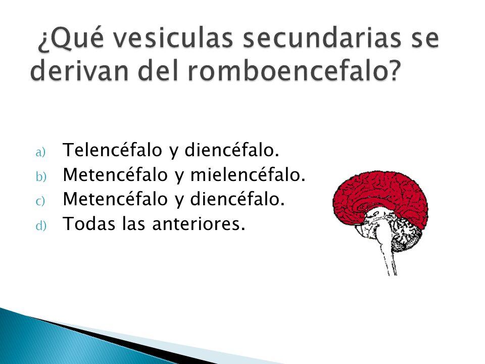 ¿Qué vesiculas secundarias se derivan del romboencefalo