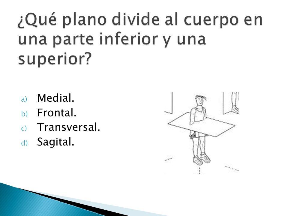 ¿Qué plano divide al cuerpo en una parte inferior y una superior
