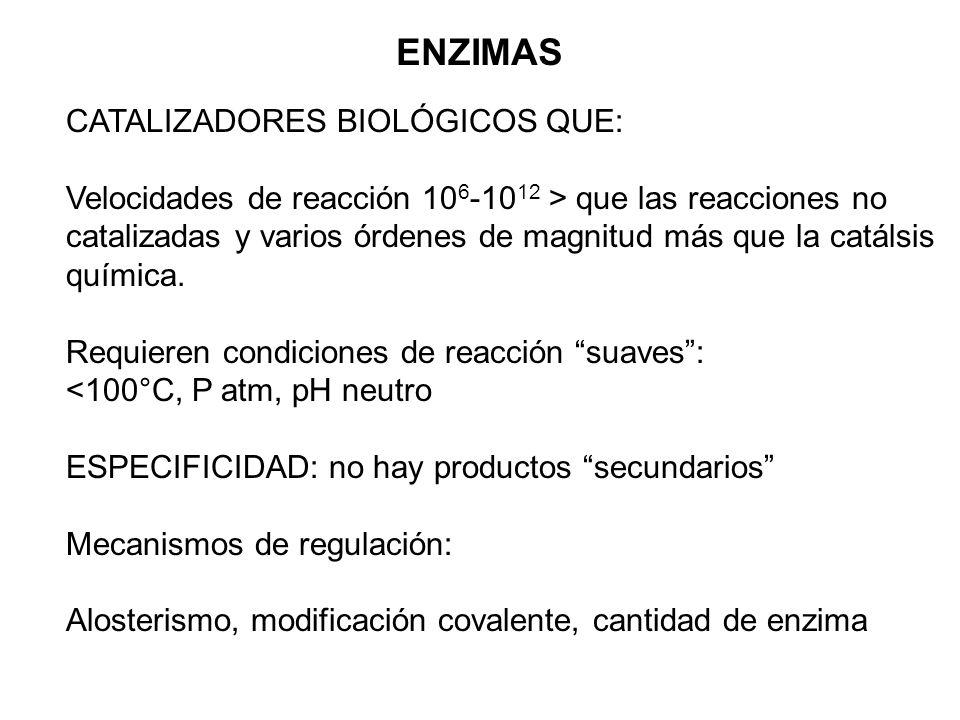 ENZIMAS CATALIZADORES BIOLÓGICOS QUE: