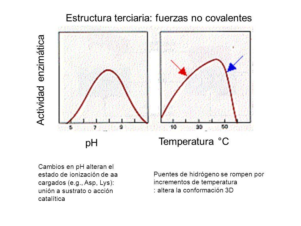 Estructura terciaria: fuerzas no covalentes