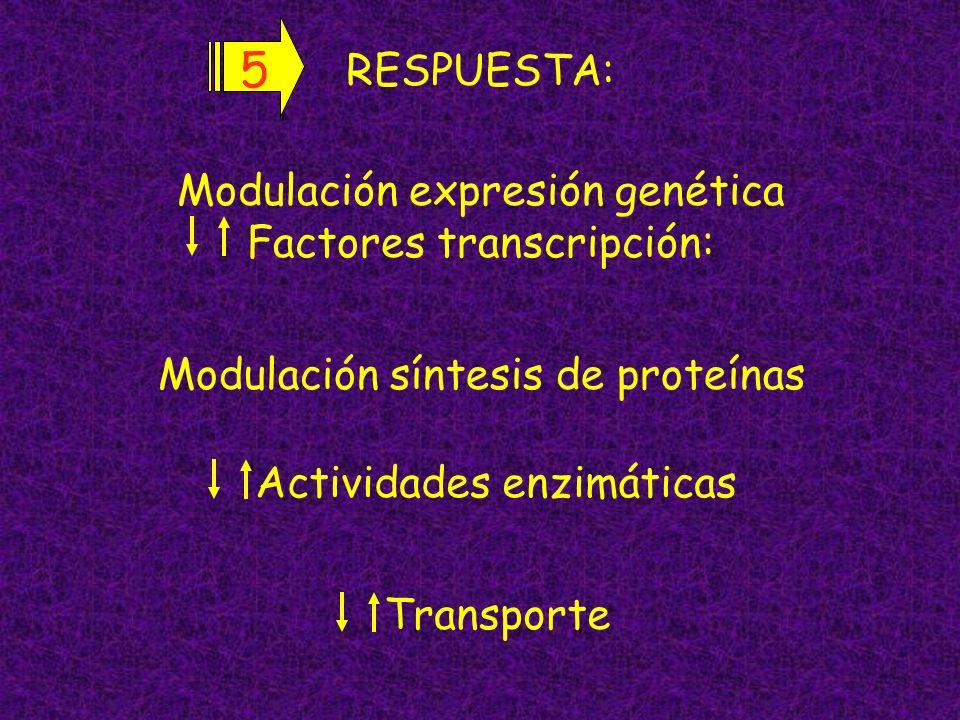 5 RESPUESTA: Modulación expresión genética Factores transcripción: