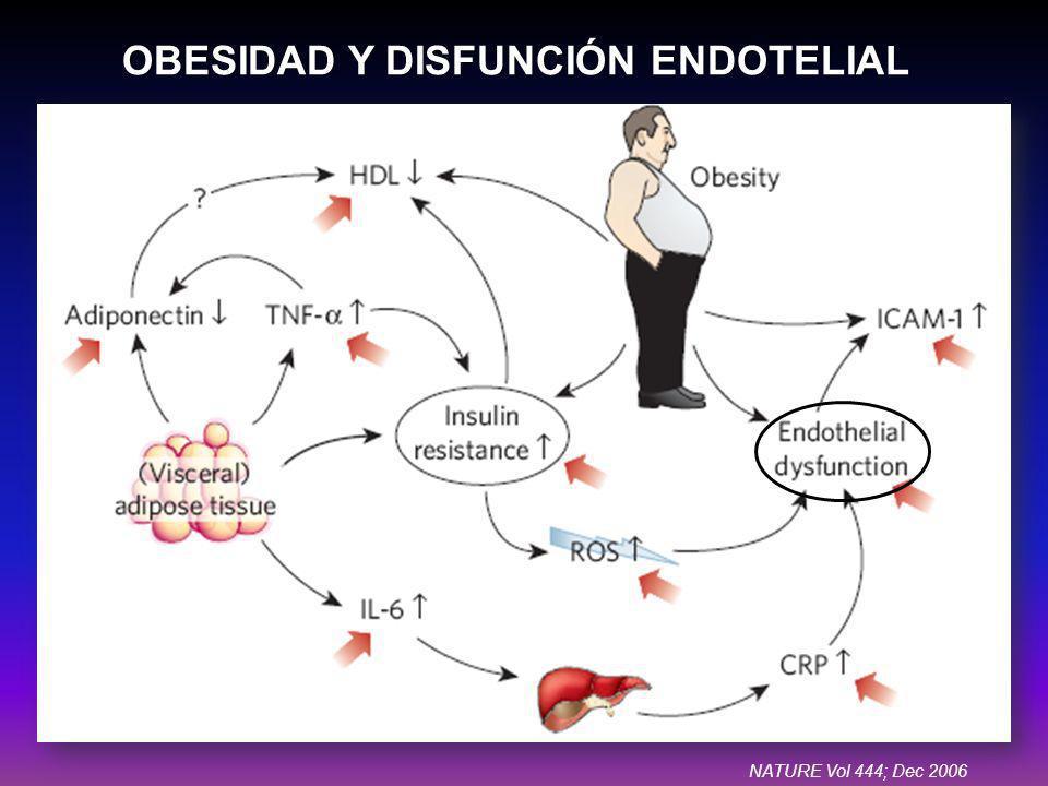 OBESIDAD Y DISFUNCIÓN ENDOTELIAL