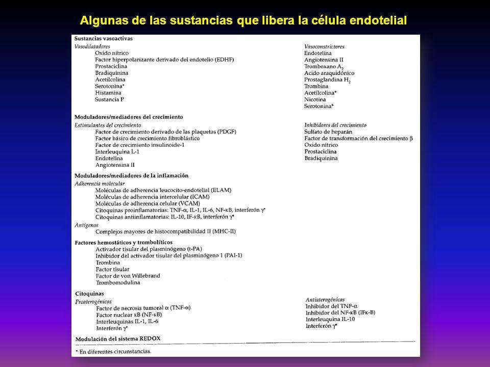 Algunas de las sustancias que libera la célula endotelial