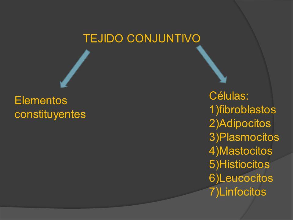 TEJIDO CONJUNTIVO Células: 1)fibroblastos. 2)Adipocitos. 3)Plasmocitos. 4)Mastocitos. 5)Histiocitos.