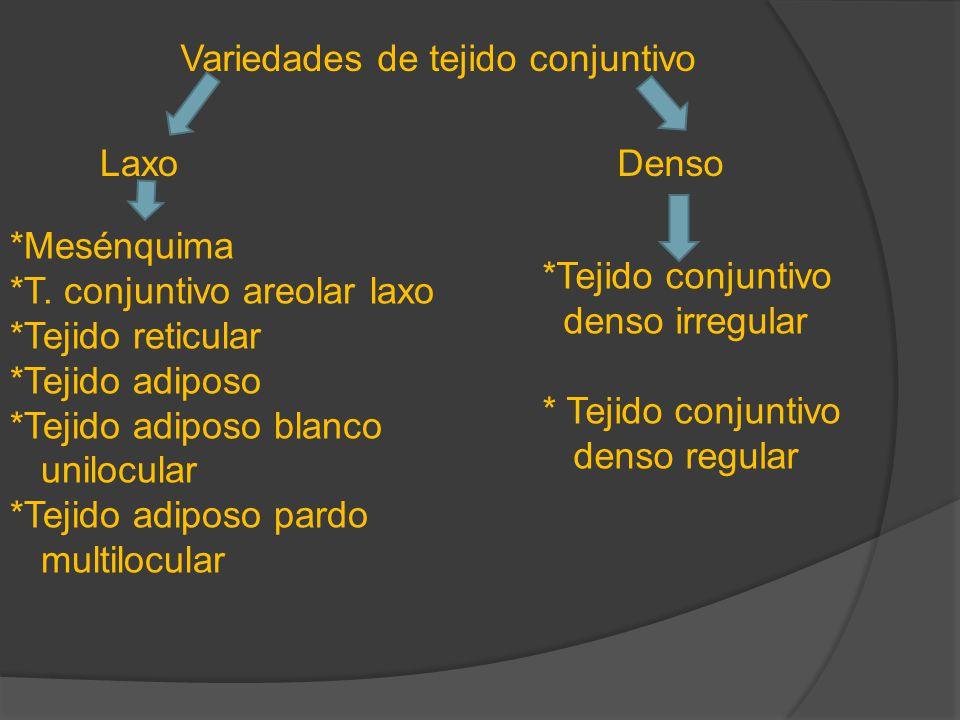 Variedades de tejido conjuntivo