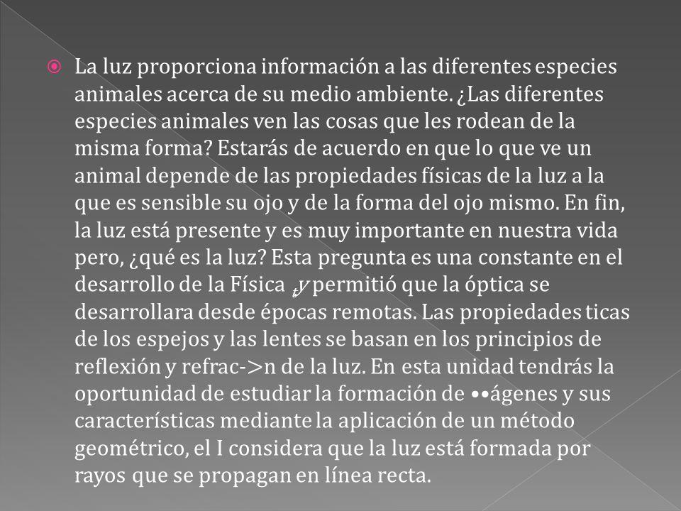 La luz proporciona información a las diferentes especies animales acerca de su medio ambiente.