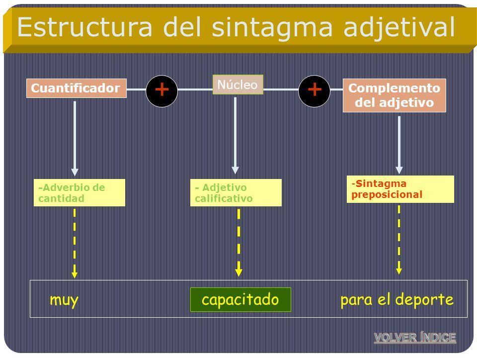 Estructura del sintagma adjetival