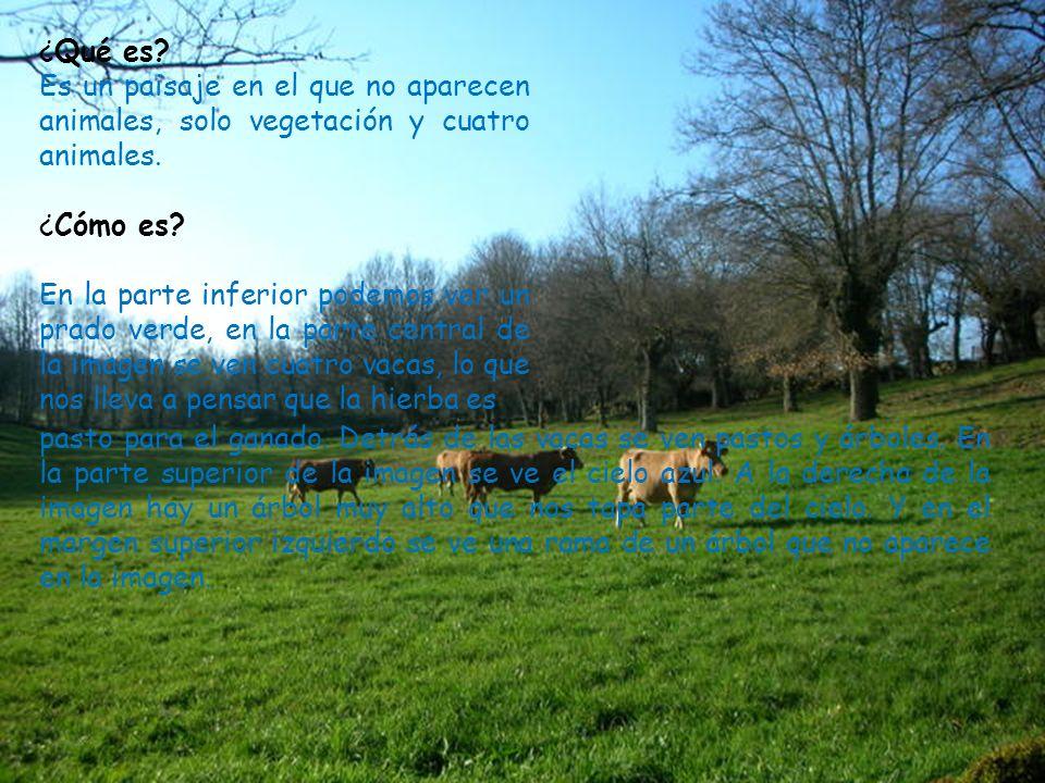 ¿Qué es Es un paisaje en el que no aparecen animales, solo vegetación y cuatro animales. ¿Cómo es