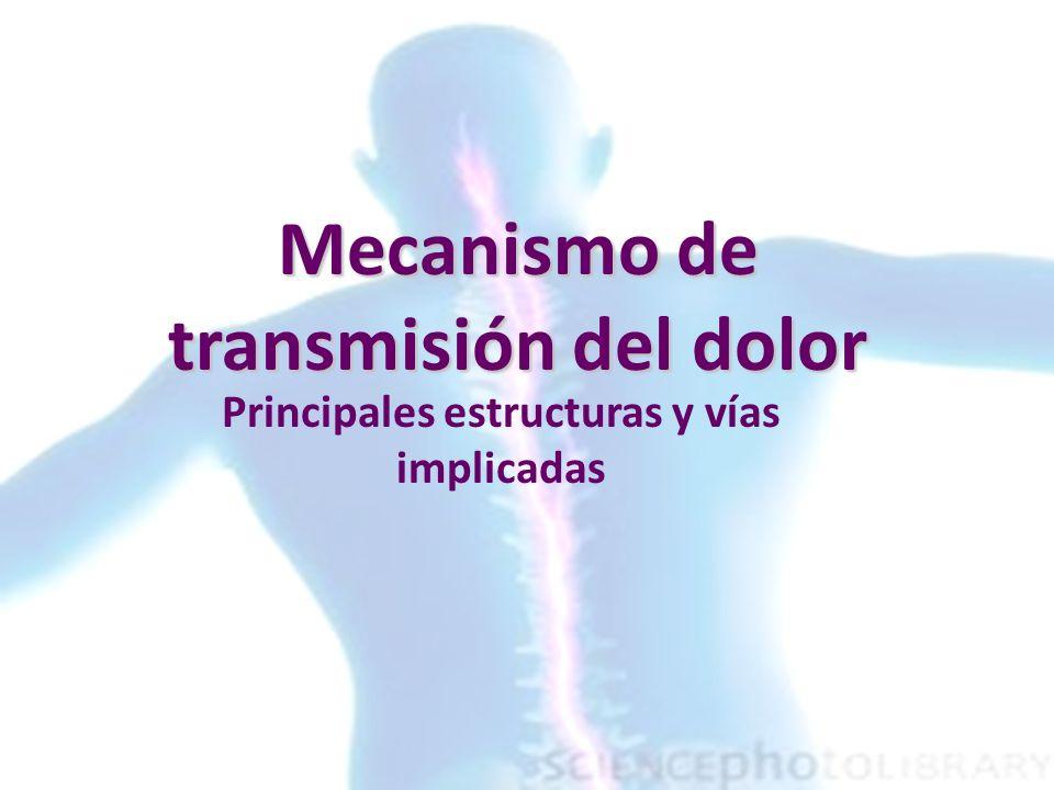 Mecanismo de transmisión del dolor