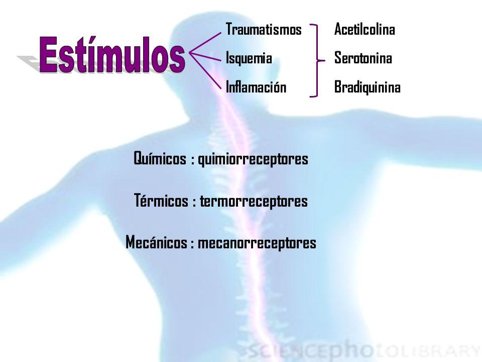 Estímulos Químicos : quimiorreceptores Térmicos : termorreceptores