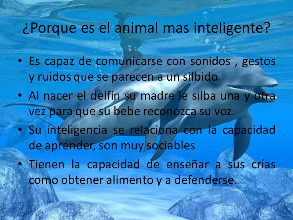 ¿Porque es el animal mas inteligente