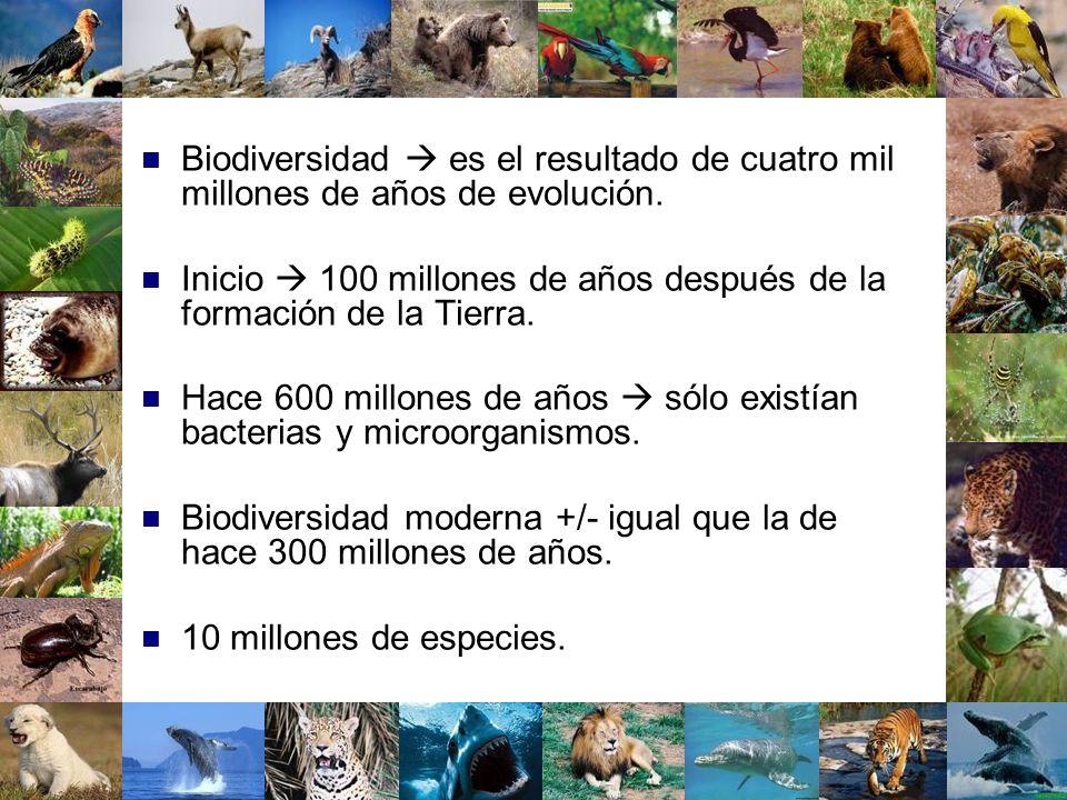 Biodiversidad  es el resultado de cuatro mil millones de años de evolución.