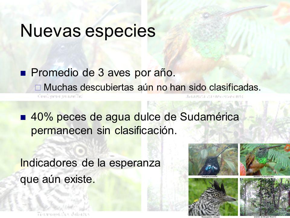 Nuevas especies Promedio de 3 aves por año.