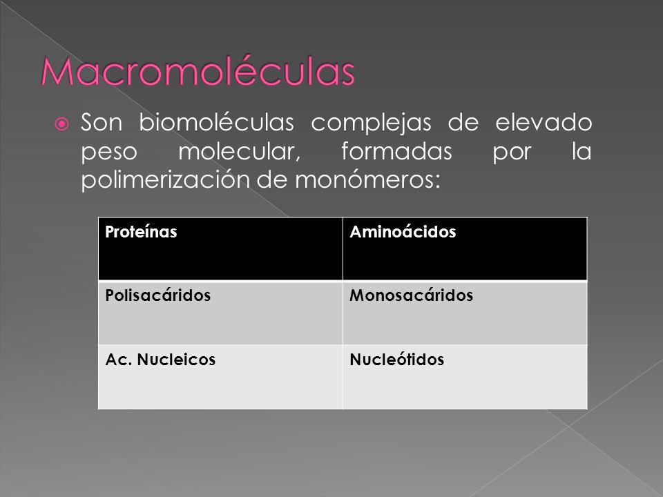 Macromoléculas Son biomoléculas complejas de elevado peso molecular, formadas por la polimerización de monómeros: