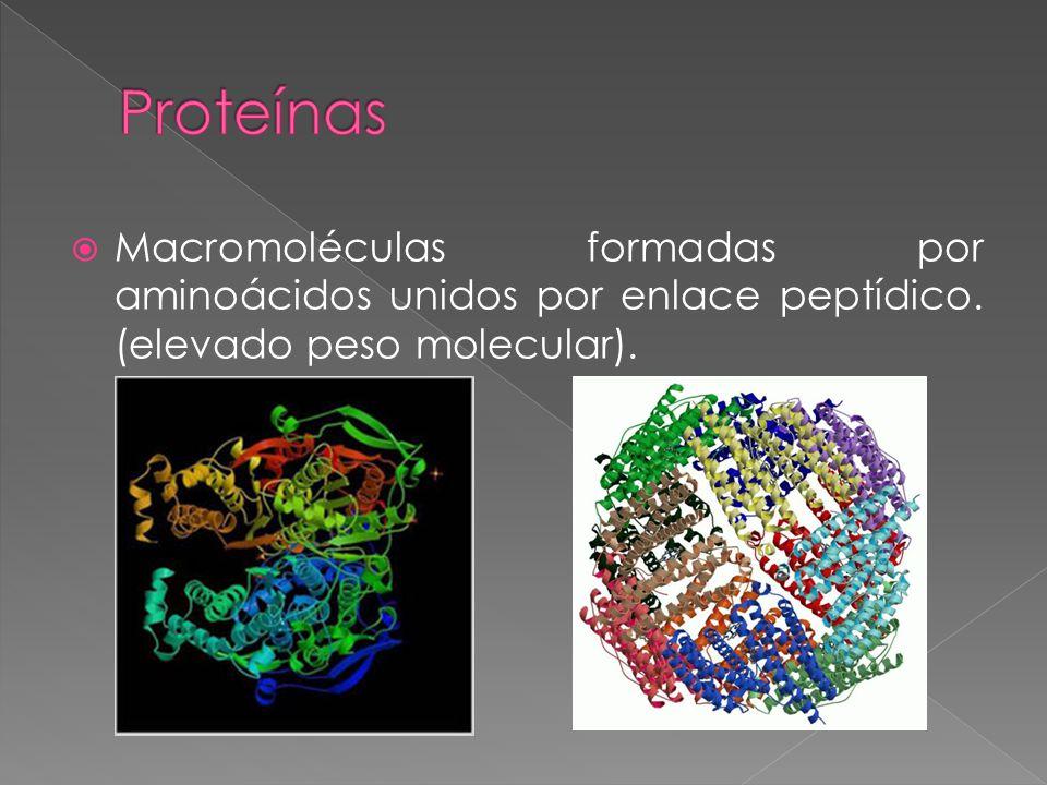Proteínas Macromoléculas formadas por aminoácidos unidos por enlace peptídico.
