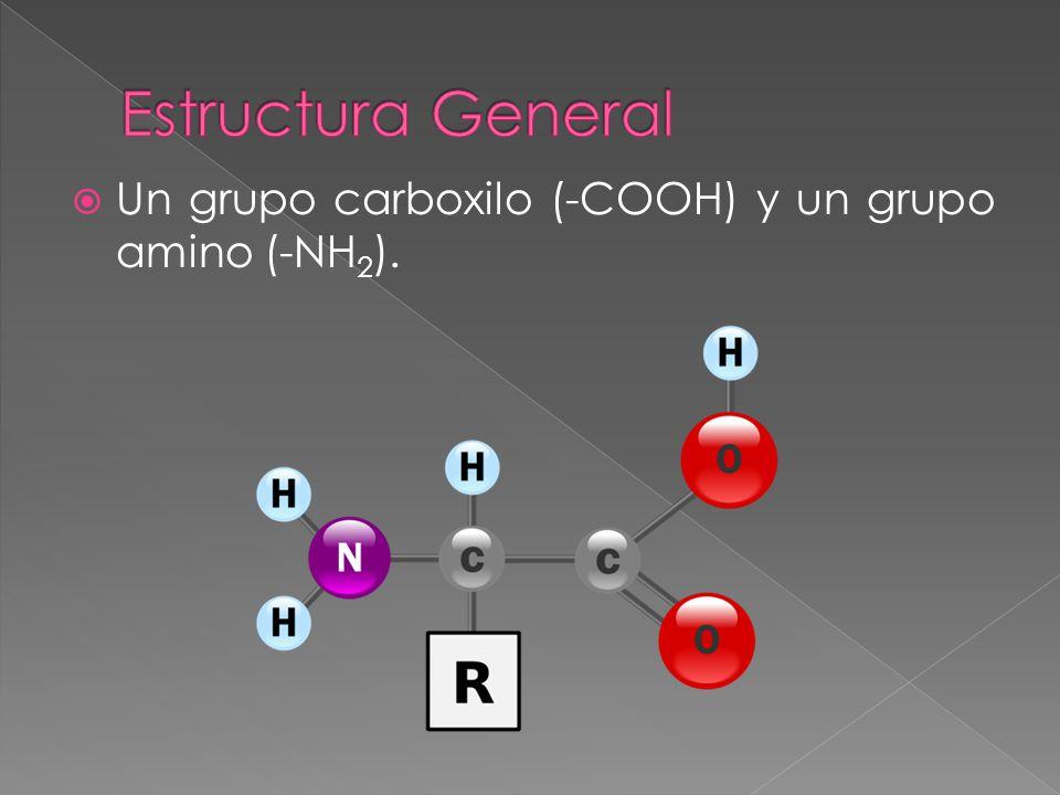Estructura General Un grupo carboxilo (-COOH) y un grupo amino (-NH2).