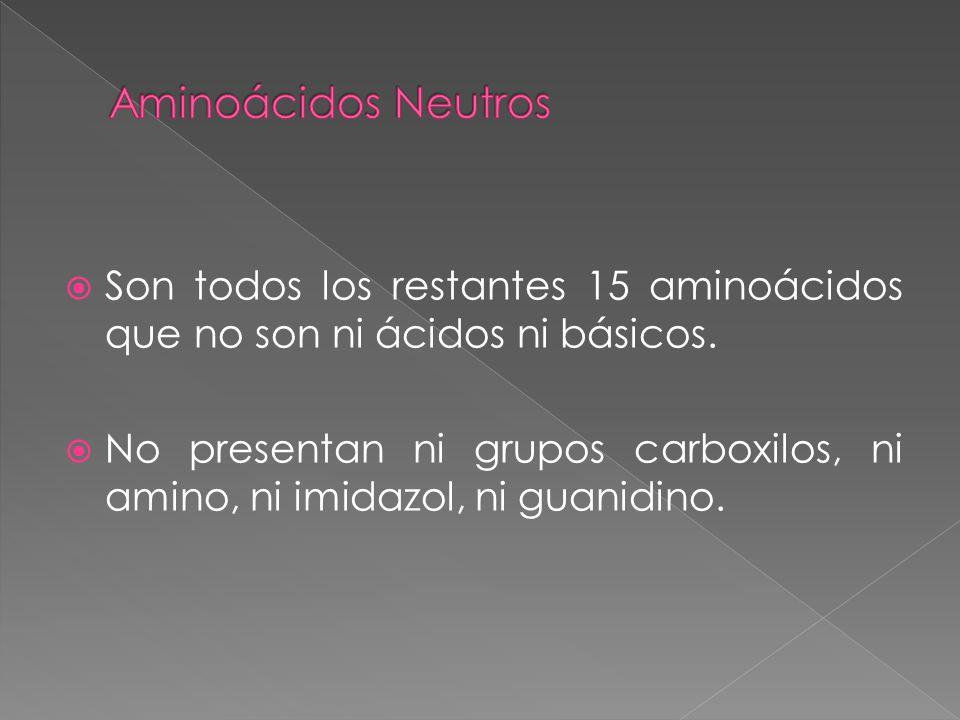 Aminoácidos Neutros Son todos los restantes 15 aminoácidos que no son ni ácidos ni básicos.