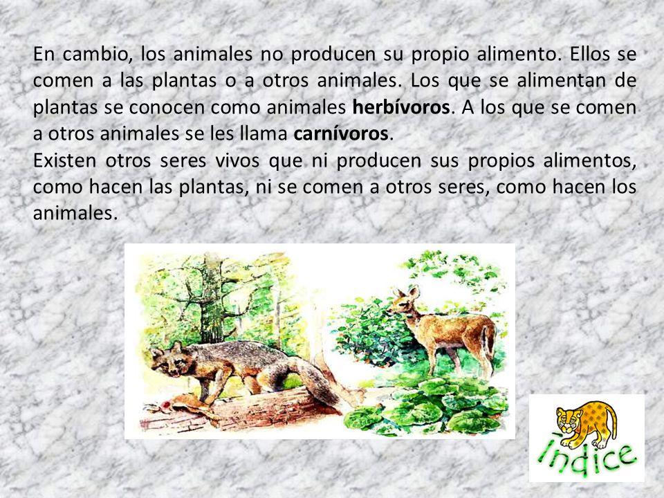 En cambio, los animales no producen su propio alimento