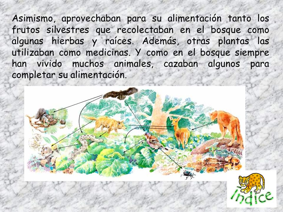 Asimismo, aprovechaban para su alimentación tanto los frutos silvestres que recolectaban en el bosque como algunas hierbas y raíces.