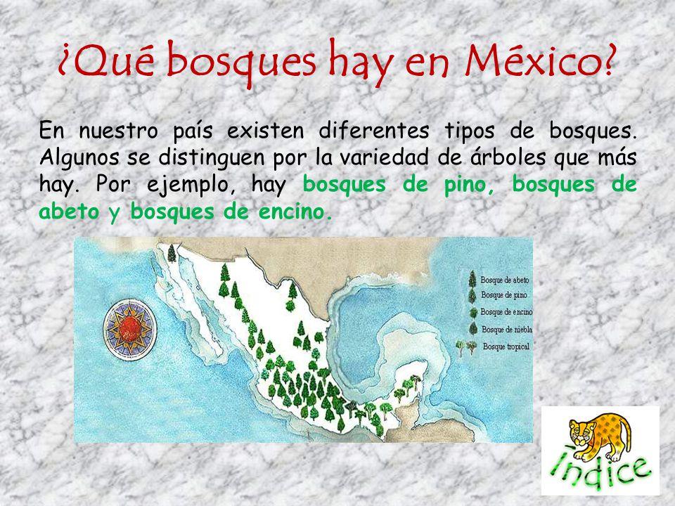 ¿Qué bosques hay en México