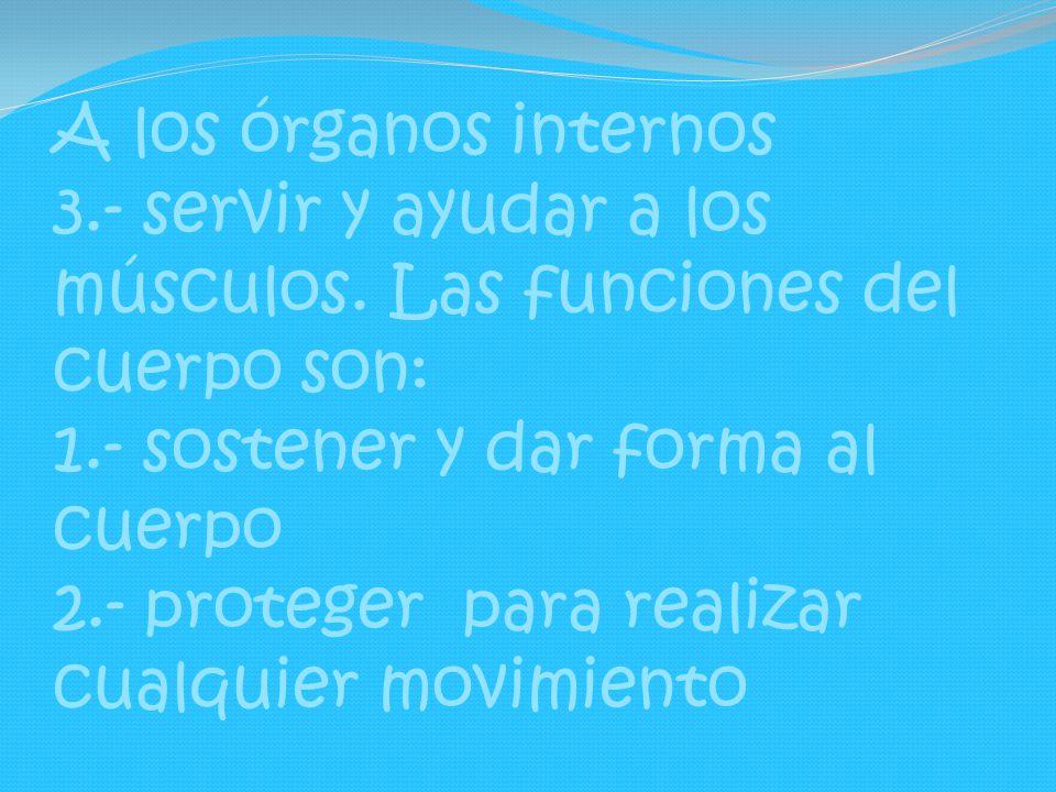 A los órganos internos 3. - servir y ayudar a los músculos