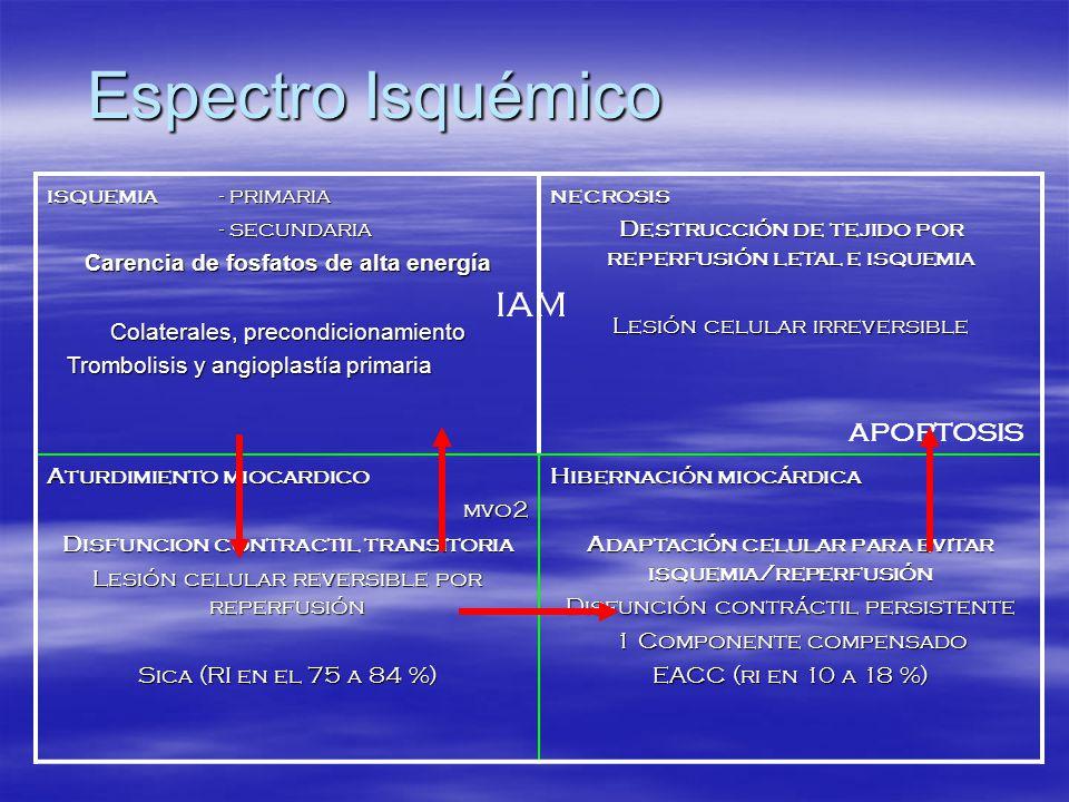 Espectro Isquémico IAM APOPTOSIS isquemia - primaria - secundaria