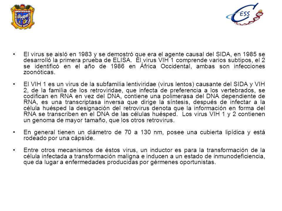 El virus se aisló en 1983 y se demostró que era el agente causal del SIDA, en 1985 se desarrolló la primera prueba de ELISA. El virus VIH 1 comprende varios subtipos, el 2 se identificó en el año de 1986 en África Occidental, ambas son infecciones zoonóticas.