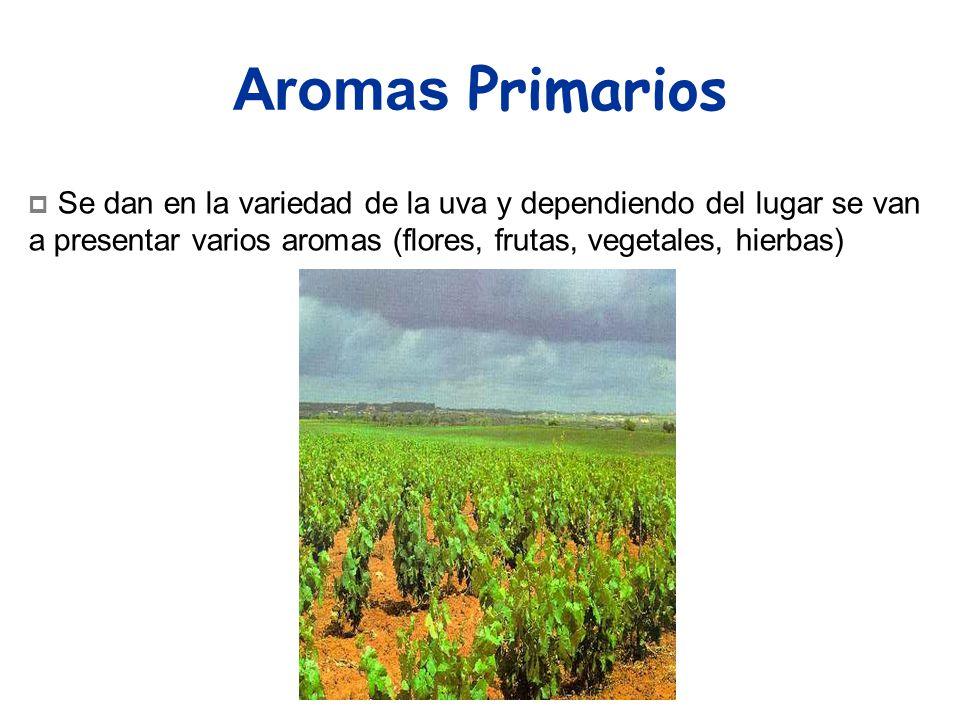 Aromas Primarios Se dan en la variedad de la uva y dependiendo del lugar se van a presentar varios aromas (flores, frutas, vegetales, hierbas)
