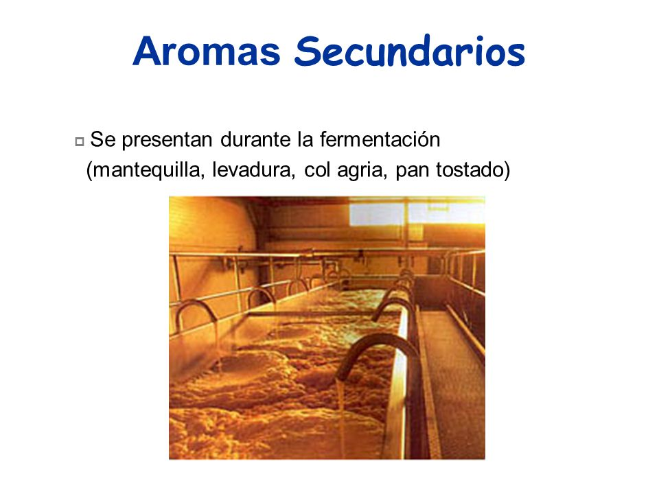 Aromas Secundarios (mantequilla, levadura, col agria, pan tostado)