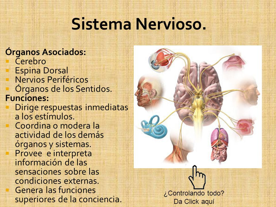 Sistema Nervioso. Órganos Asociados: Cerebro Espina Dorsal