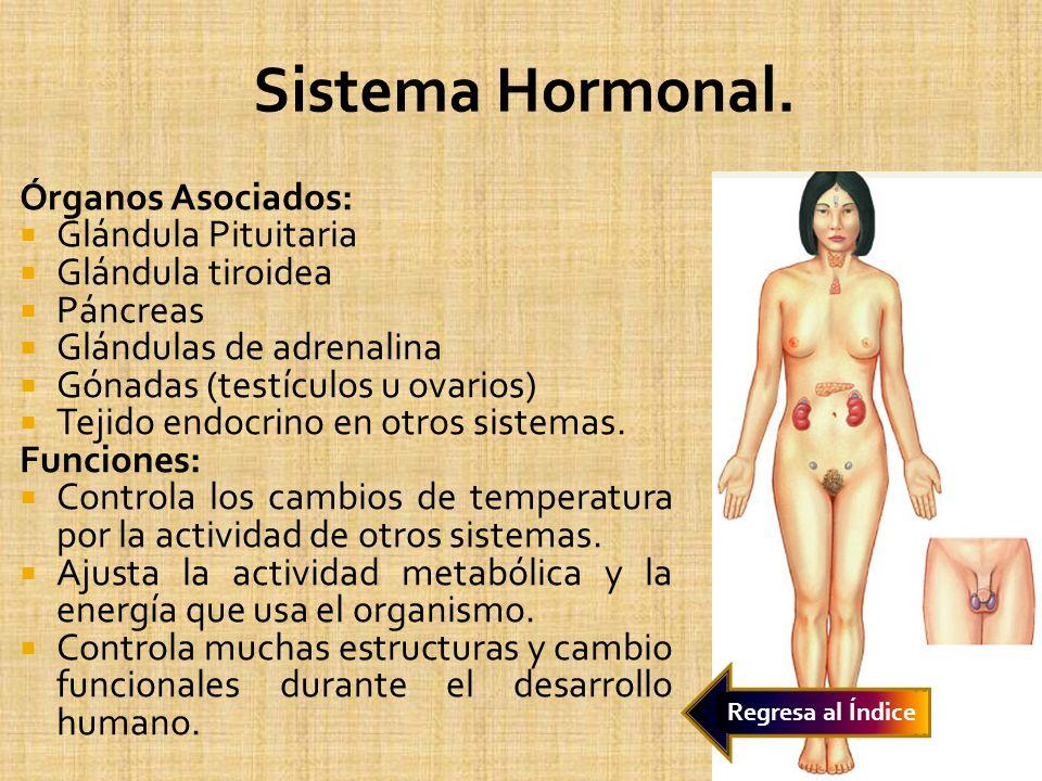 Sistema Hormonal. Órganos Asociados: Glándula Pituitaria