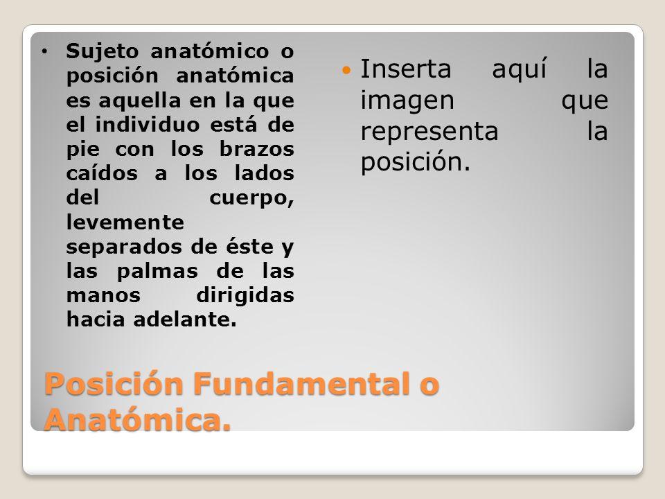 Posición Fundamental o Anatómica.