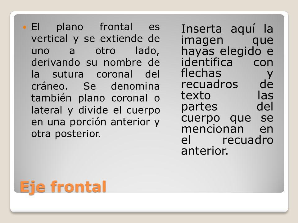 El plano frontal es vertical y se extiende de uno a otro lado, derivando su nombre de la sutura coronal del cráneo. Se denomina también plano coronal o lateral y divide el cuerpo en una porción anterior y otra posterior.
