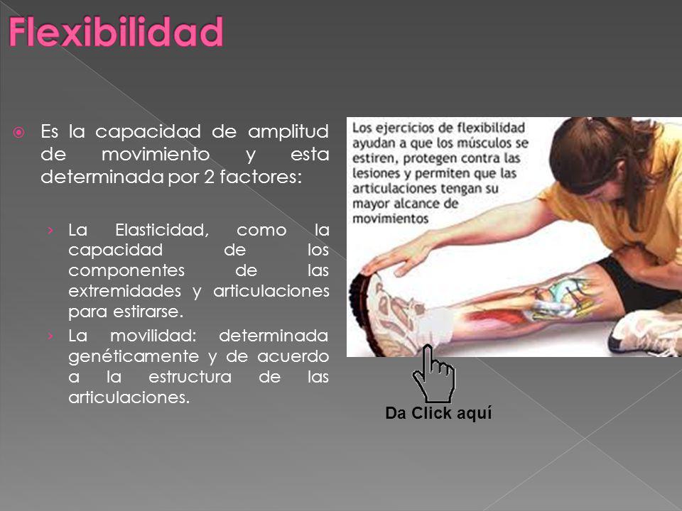 Flexibilidad Es la capacidad de amplitud de movimiento y esta determinada por 2 factores: