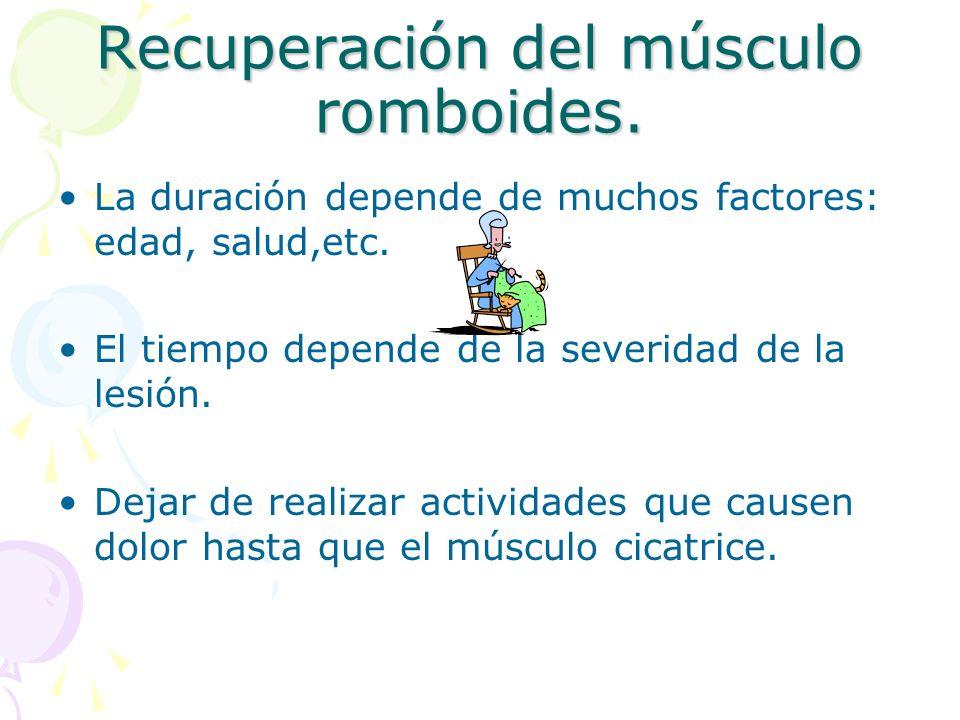 Recuperación del músculo romboides.