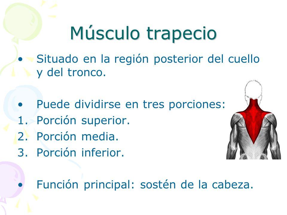 Músculo trapecio Situado en la región posterior del cuello y del tronco. Puede dividirse en tres porciones: